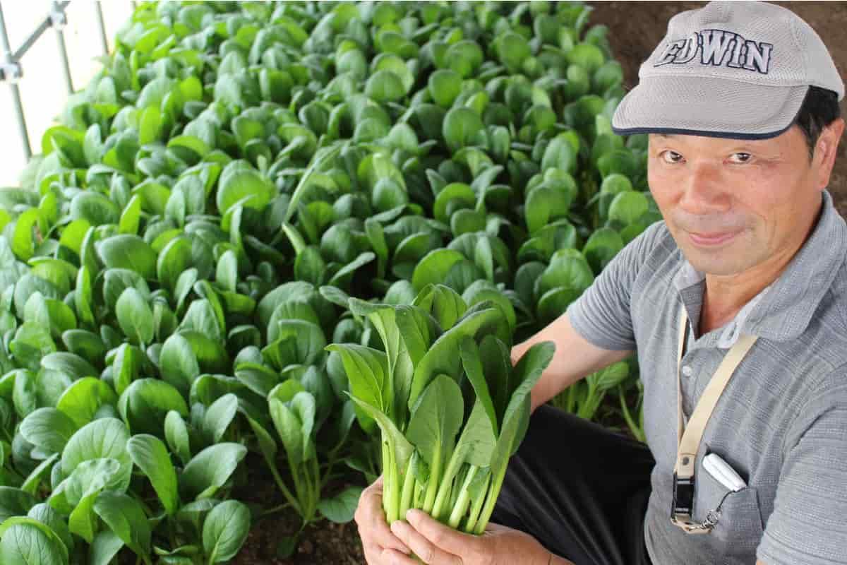小松菜の中嶋さん