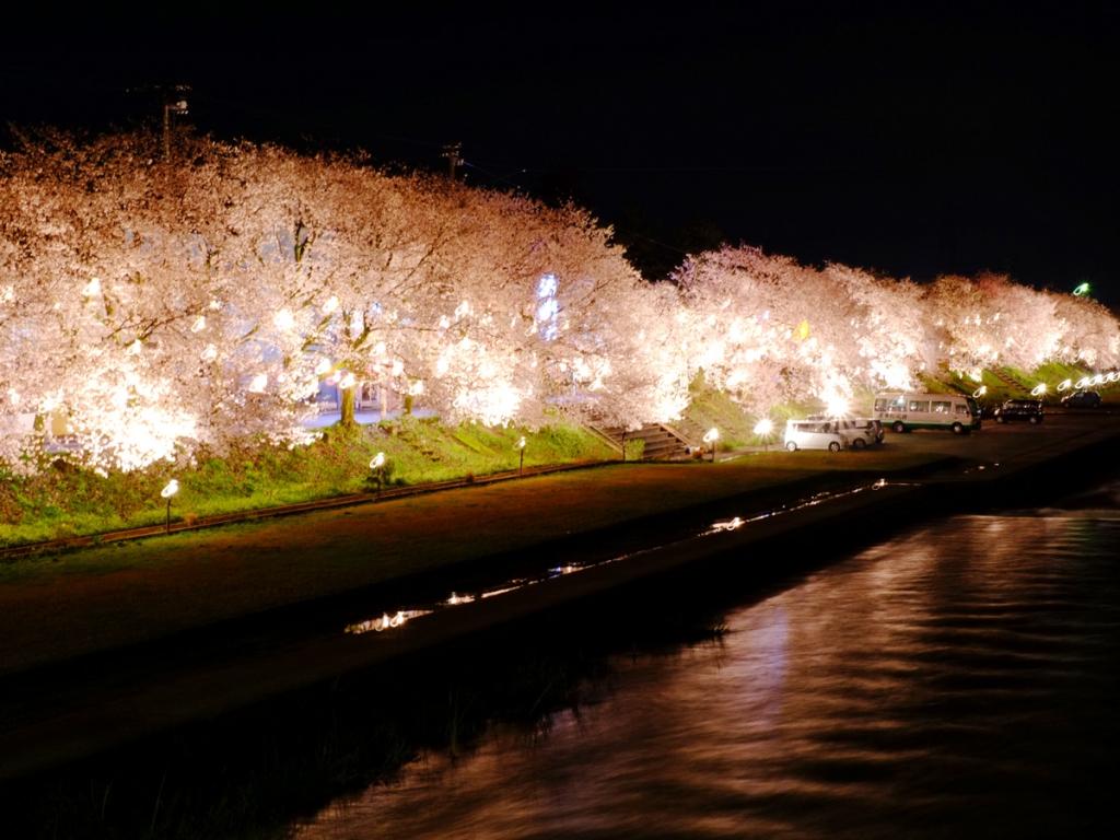 小矢部川公園千本桜ライトアップ1440146553旅々なんと1200