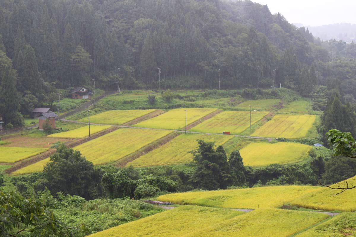 なべちゃん農場の田んぼ