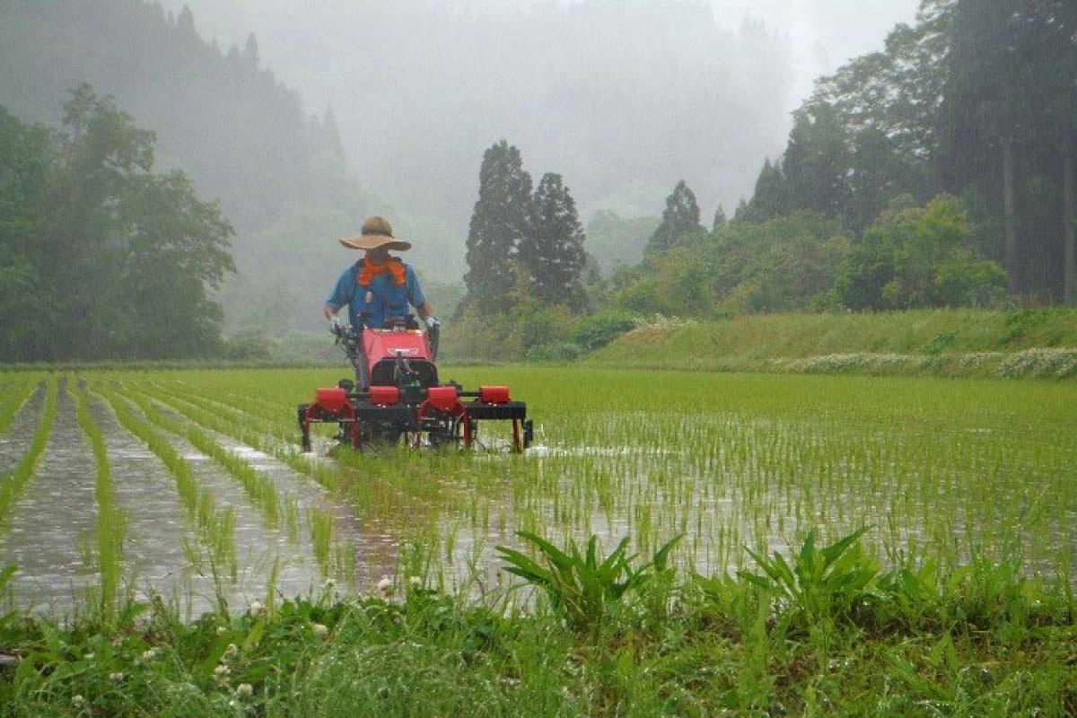 なべちゃん農場の作業風景