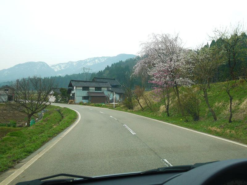春さくらP1160168