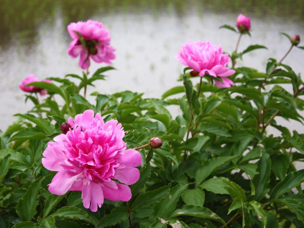 花と田IMG_8657